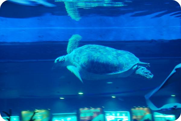 北京二日游 下篇 动物园and海洋馆