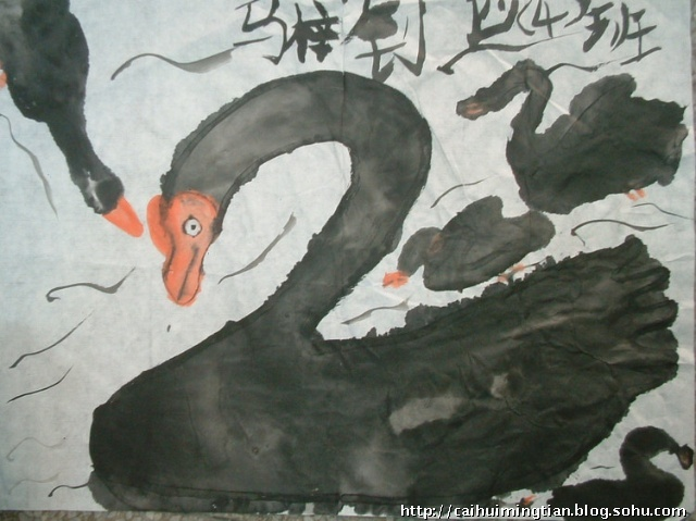 在发现澳大利亚的黑天鹅之前,欧洲人认为天鹅都是白色的,黑天鹅曾经是欧洲人言谈与写作中的惯用语,用来指不可能存在的事物,但这个不可动摇的信念随着第一只黑天鹅的出现而崩溃。 黑天鹅分布于澳大利亚南部、塔斯马尼亚岛和新西兰及其邻近岛屿。栖息于海岸、海湾、湖泊等水域。成对或结群活动。以水生植物和水生小动物为食。 黑天鹅属大型游禽。体长80~120cm,体重6000~8000g。黑天鹅红嘴黑毛,姿态优美,风度翩翩,是高贵、美丽、吉祥的象征。 一起来用我们的画笔画下快乐的黑天鹅吧!