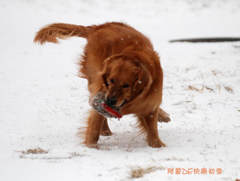 冬眠雪天动物图片