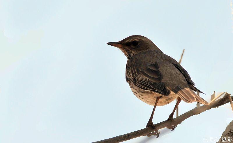 树林里不知名的小鸟-我的视觉生活-我的搜狐
