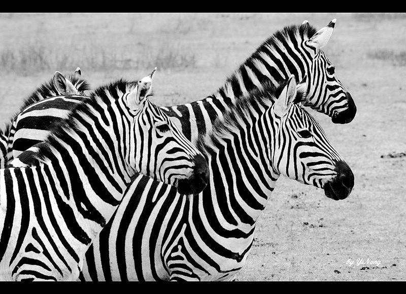 壁纸 动物 儿童画 马 骑马 800_580