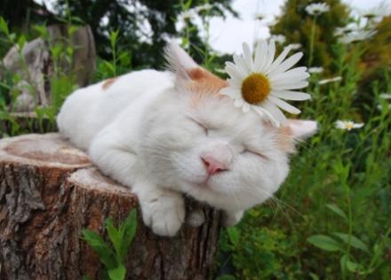 壁纸 动物 猫 猫咪 蘑菇 香菇 小猫 桌面 440_316