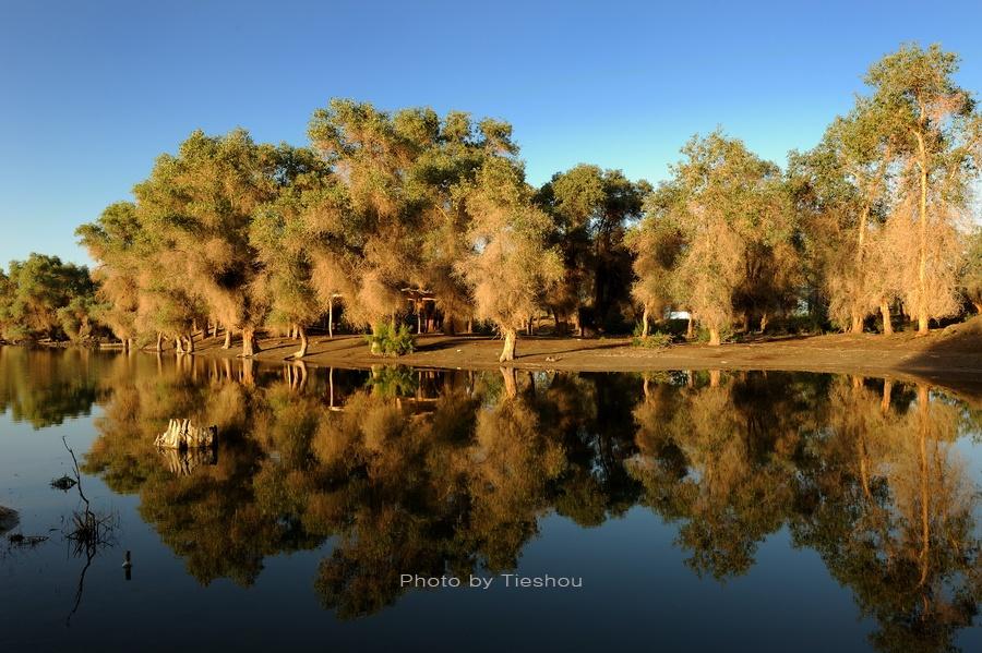 大美新疆 塔里木河边的沙雅胡杨林
