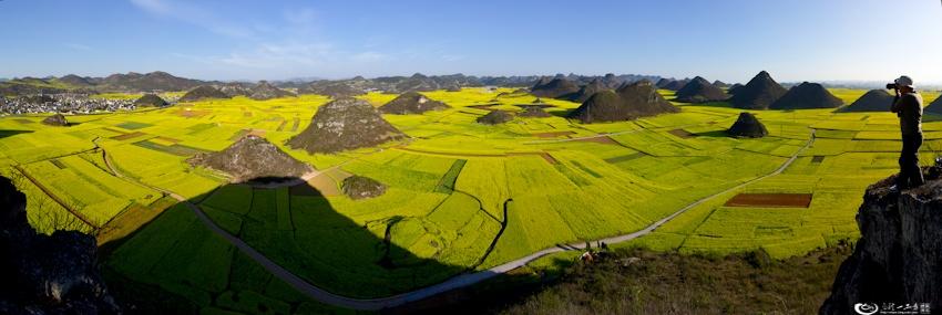 罗平油菜花海 世界最大的天然花园(转)图片
