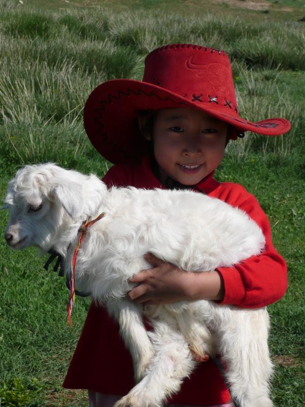 珍宝的作文:可爱的小羊羔