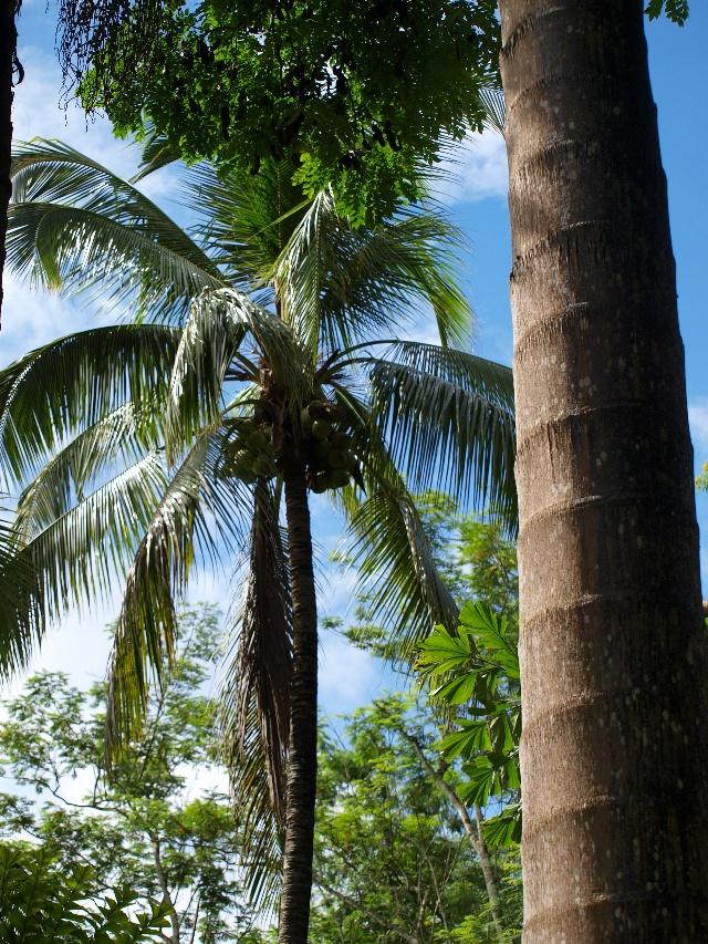 荒岛椰子树图片
