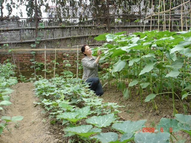 绿茄子的生长过程(37) 胡萝卜的生长过程(3-紫茄子的生长过程 27