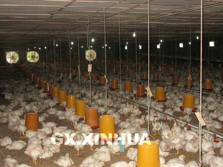 就是生产大连市场常见的放心鸡的公司----大成养鸡公司.