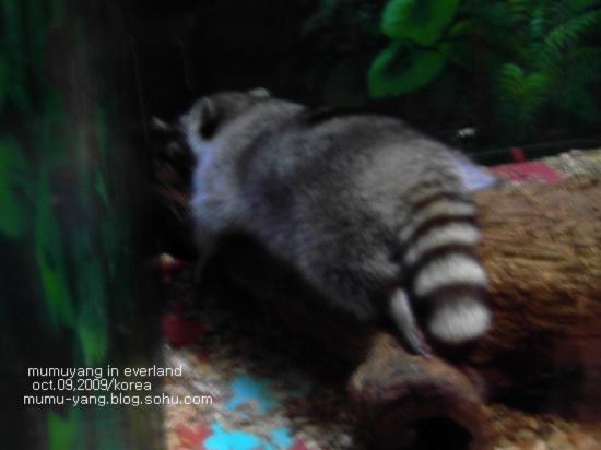 夜行动物馆里非常非常安静,因为小家伙们白天都要睡觉,不能吵醒他们.