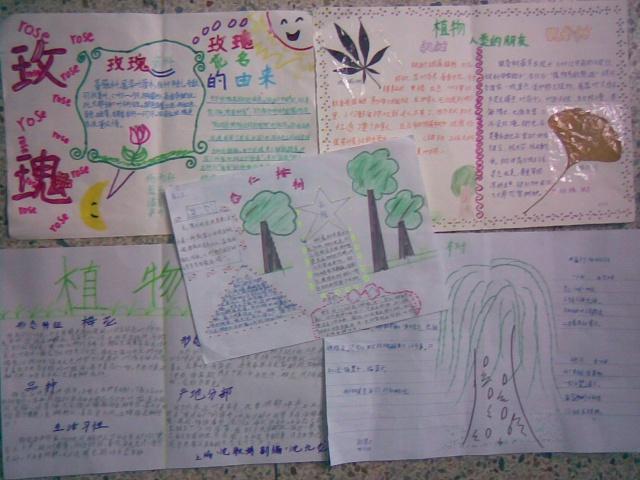 课外阅读:制作树的手抄报