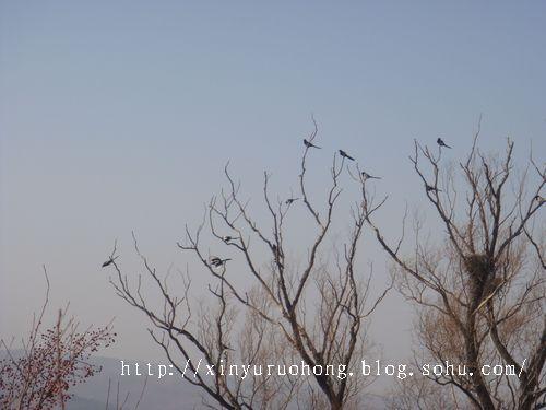 小树木雕刻烟杆图片