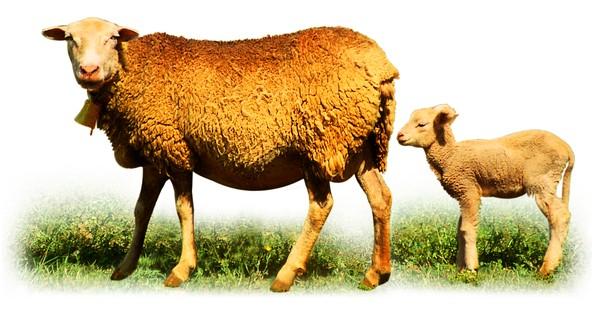 胎生和卵生动物