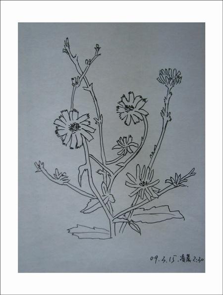 花开点点(我的水笔画)-树叶上的舞蹈-搜狐博客