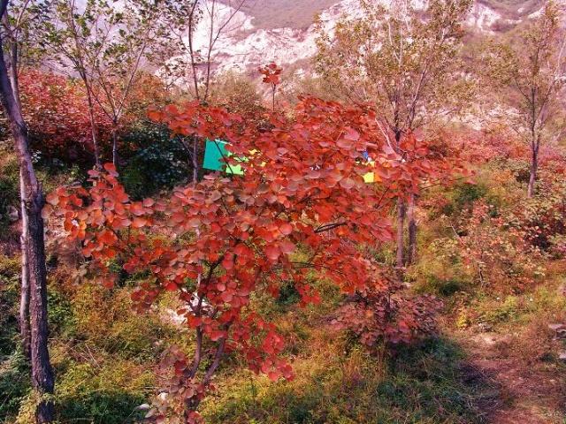 山西风景名胜-----崛围山景区赏红叶