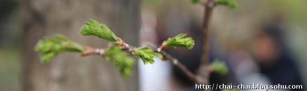 哥哥射种子_买了好多种子要哥哥帮我种.天天催着,生怕错过春天.