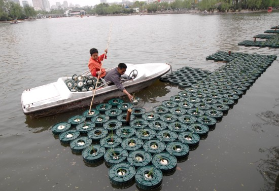 4月11日,工作人员在人工湖浮岛上种植水生植物.