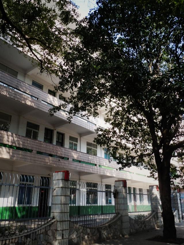 邵阳一中,狗学校念作文和初中的伢子,我们是一路步行过去的最美高中初中乌镇图片