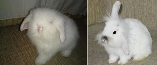 壁纸 动物 兔子 500_208