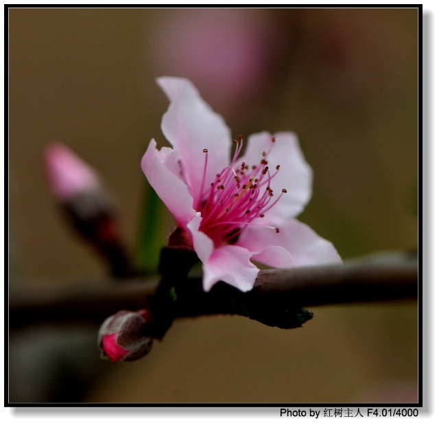 五瓣桃花的折法步骤图