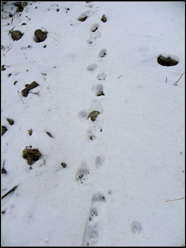 路上的一串动物脚印