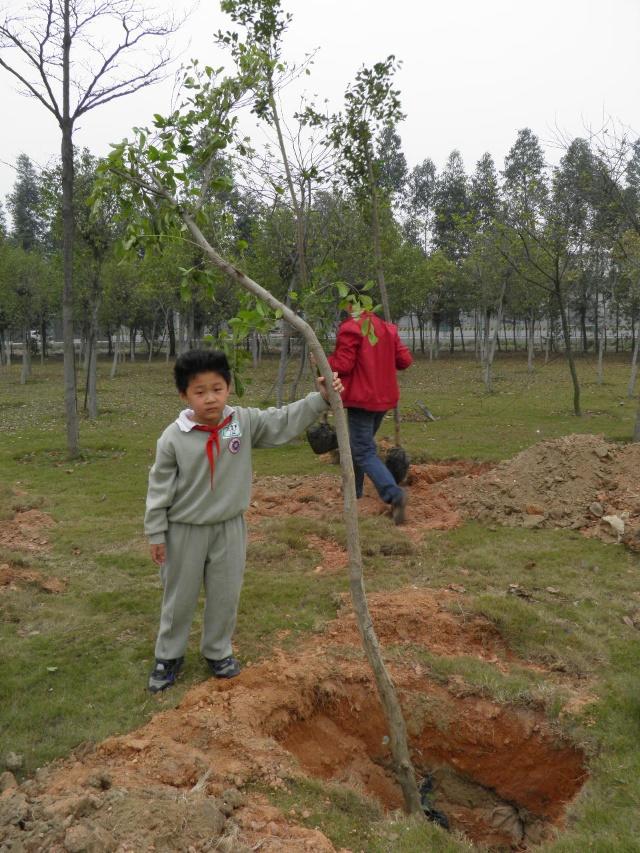 来种树的人很多,小树苗的数量太少了,要好几个家庭一起种.
