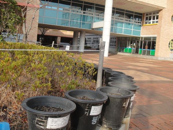 生种花的塑料桶