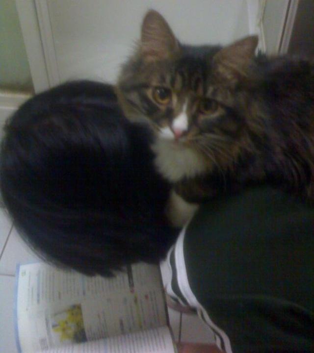 真是不知道世界上怎么会有猫咪这么可爱的动物,我