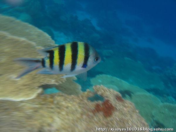马尔代夫——海底世界