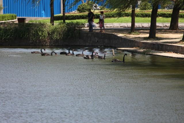 武汉动物园风光另一角