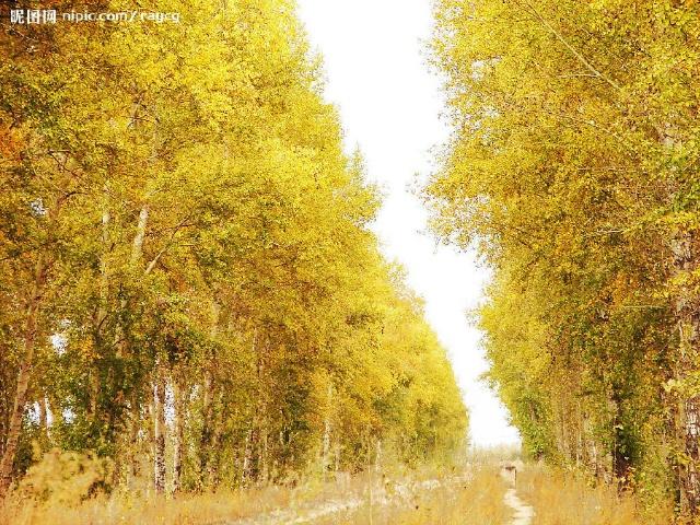 幽径的树林风景图
