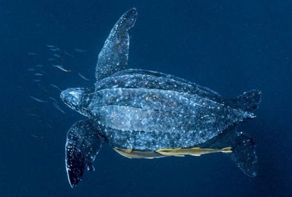海洋动物四方连续