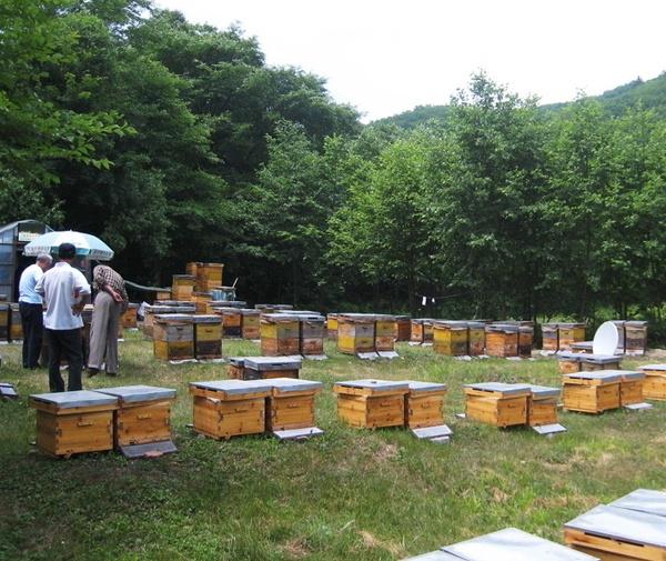 蜂蜜哪家好————济南市南部山区锦绣川艾家村--誉真养蜂场 qq