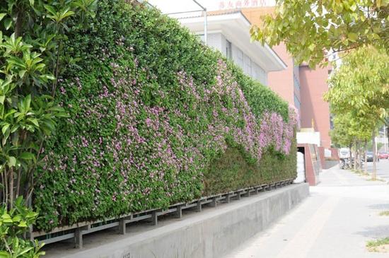 围墙绿植设计分享展示图片