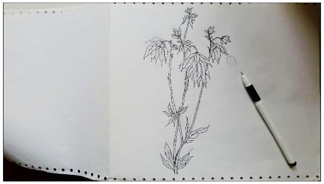 叠纸花朵的步骤图片