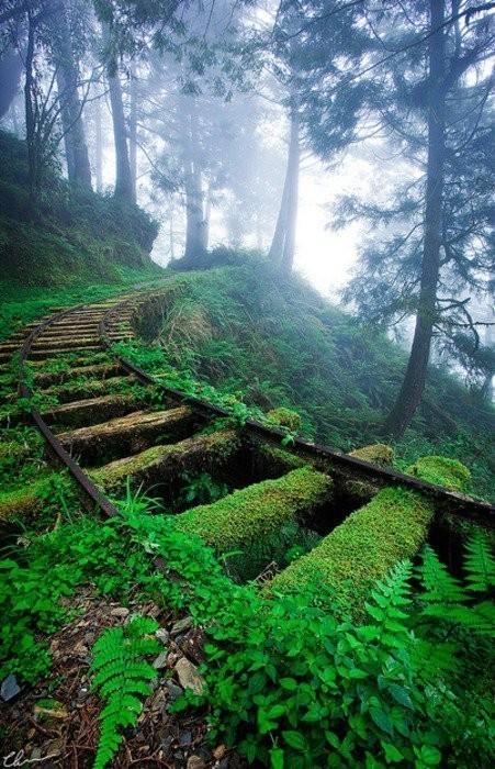 森林中杂草丛生的铁轨