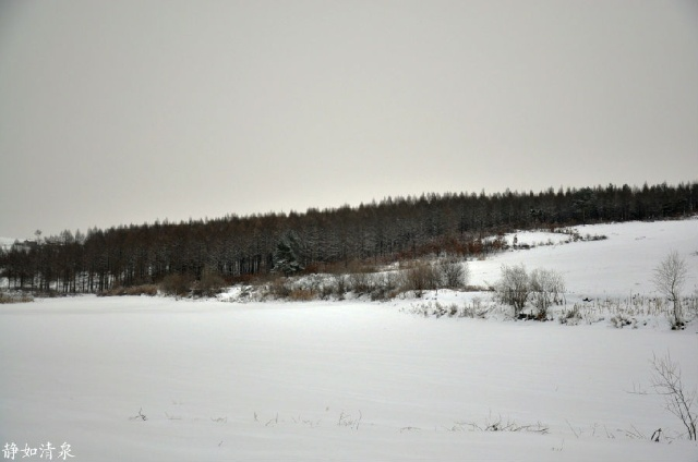 我的梦里雪乡之三----素描画一样的玛瑙之乡逊克