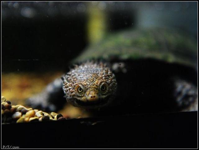 蜗牛是卵生动物还是胎生动物