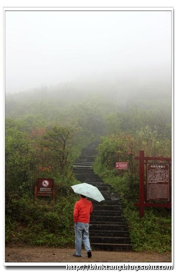 风雨中的杜鹃花-风雨杜鹃红