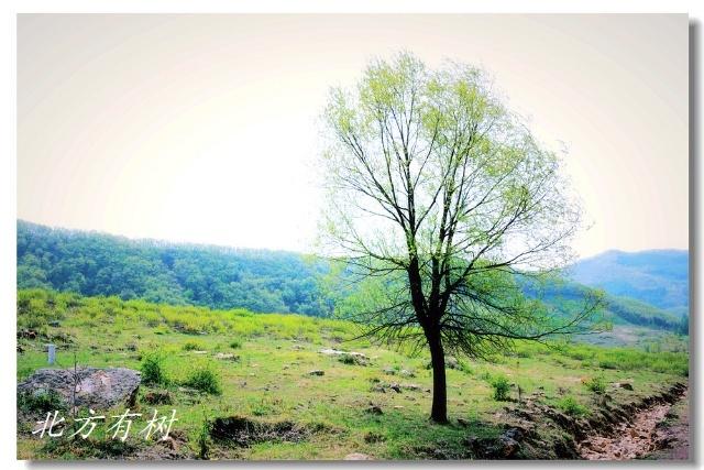 春天树木稀疏的山岗动画图片